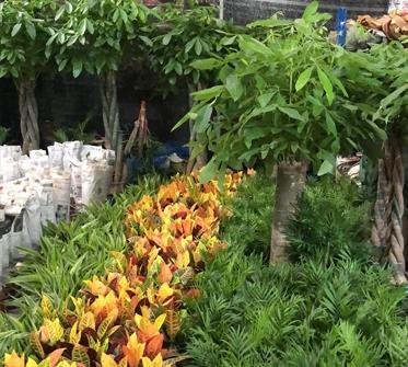 城市屋顶园林设计要注意的几个方面